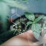 Qu'est-ce qui rend les cannabinoïdes bruts si spéciaux ?