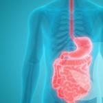 Comment le CBD pourrait participer à la santé intestinale et la digestion ?